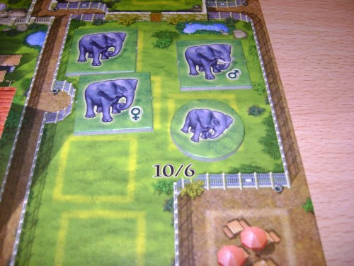 Zoolotetto Elephants